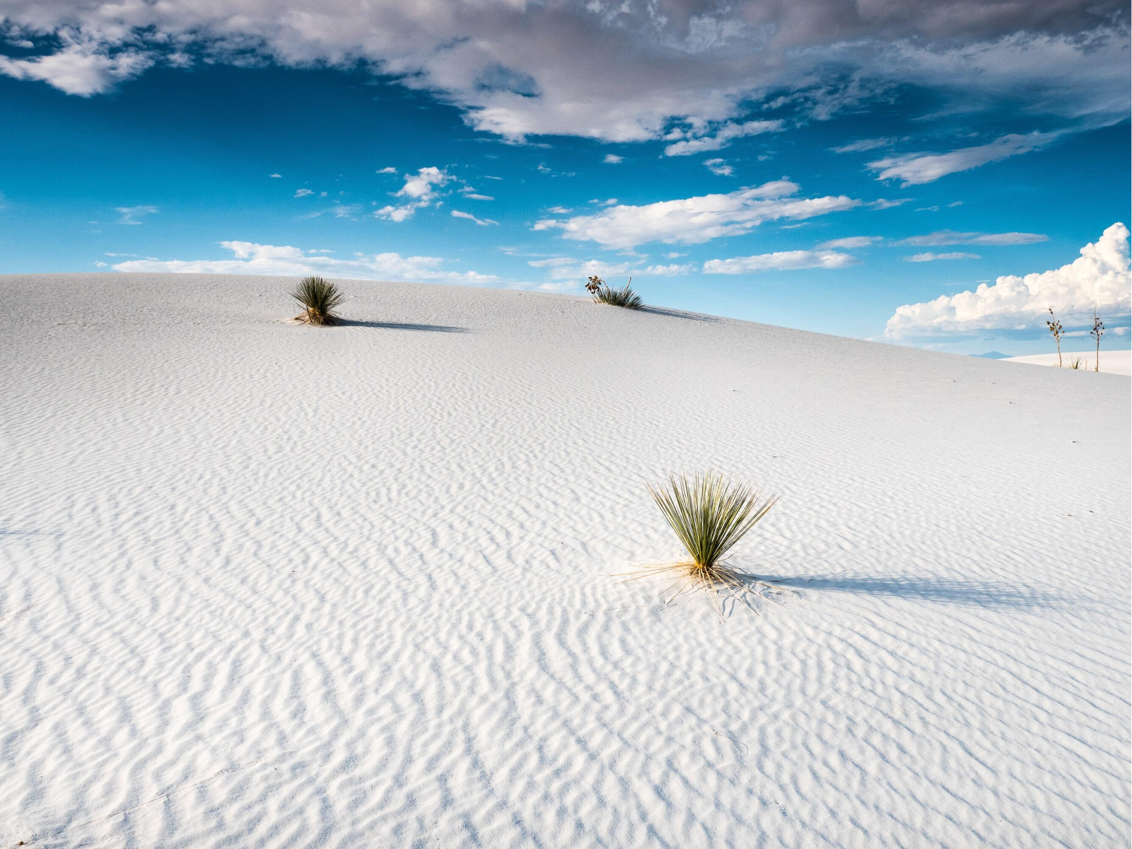 White gypsum sand at White Sands New Mexico National Park